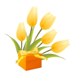 Isolation gift and white tulips vector image