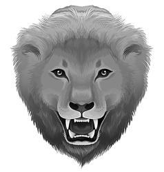 A grey lion vector image vector image