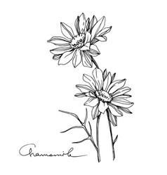 Chamomile floral botanical flower black vector