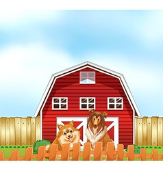 Dogs and barn vector image