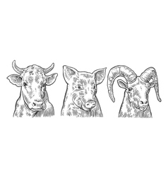 Farm animals icon set Pig cow and goat heads vector