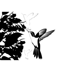 Hummingbirds vector