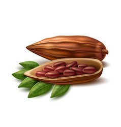 realistic cocoa beans vector image