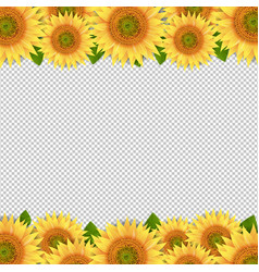 Sunflowers border isolated transparent background vector