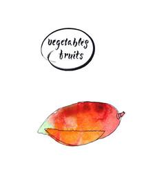 watercolor orange-red mango vector image