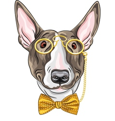 hipster dog Bullterrier breed vector image vector image