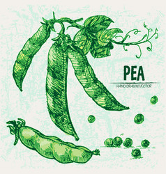Digital detailed line art color pea vector