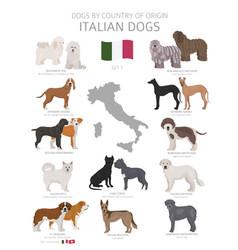 Dogs country origin italian dog breeds vector