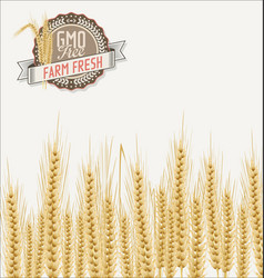 field of wheat background vector image