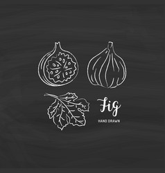 fig fruit drawing sketch fruit with chalk vector image