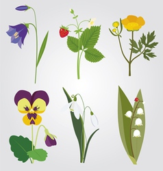 Forest flowers vector