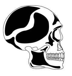 Skull of the person vector
