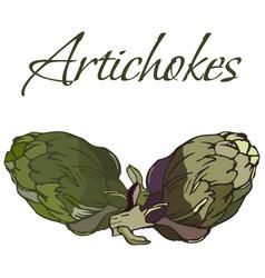 tasty veggies artichokes vector image