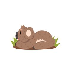 Cute koala bear lying on the ground australian vector