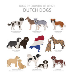 Dogs country origin dutch dog breeds vector