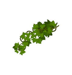 Many leaves on vine closeup vector