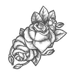 Sketch rose flower for tattoo or romantic gift vector