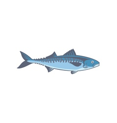 fish mackerel vector image