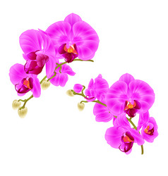 branches orchids purple flowers tropical plant vector image