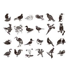 bird collection cartoon clipart vector image