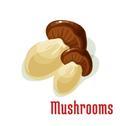 Boletus or porcini edible mushroom cartoon icon vector