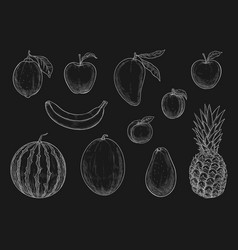 Chalk sketch tropical exotic garden fruits vector