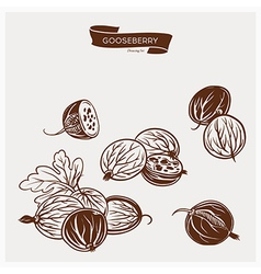 GOOSEBERRY drawing set vector image