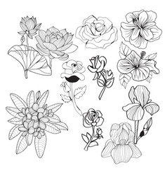 hand-drawing collection black and white flowers vector image