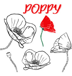 Hand drawn contour of poppy flowers vector