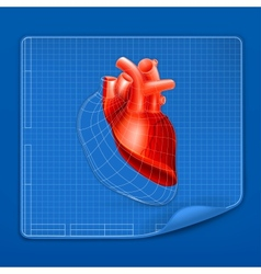 Heart structure blueprint vector image