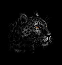 portrait a leopard head on a black background vector image