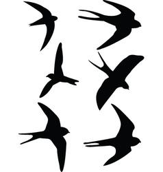 Swalows vector