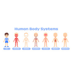 Boy and human body system poster in cartoon style vector