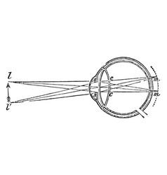 Flattened eye vintage vector