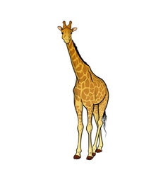 giraffe isolated on the wite vector image