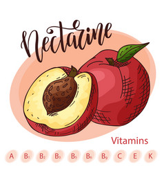Hand drawn fruit sweet nectarine vector