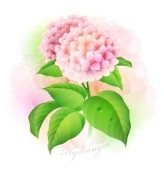 Hydrangea Botanical vector image