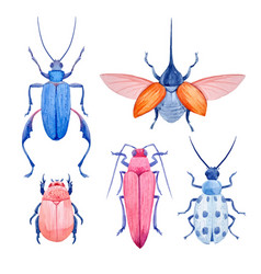 watercolor beetle set vector image