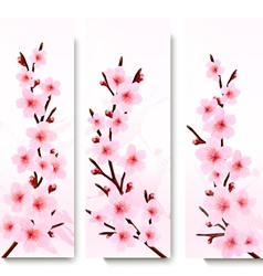 Three spring banners with blossoming sakura vector image vector image