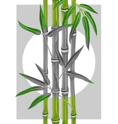 Poster with bamboo plants and leaves image for vector