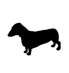 dachshund stands dog silhouette vector image