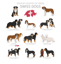 Dogs country origin swiss dog breeds vector