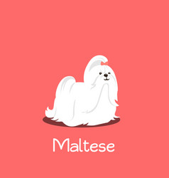 an depicting a cute maltese dog cartoon vector image vector image