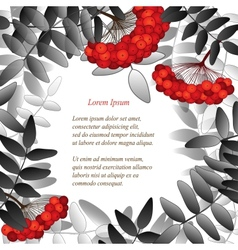Background with rowan berries leaves and place for vector image