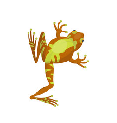 Frog cartoon tropical brown animal cartoon nature vector