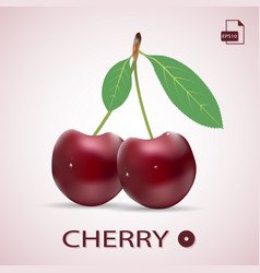 ripe red cherries twin berries with a leaves vector image vector image