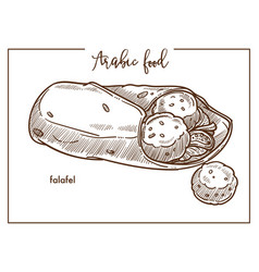 Falafel with pita bread from traditional arabic vector