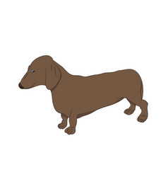 Dachshund stands dog vector