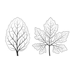 filigree of leaf vector image