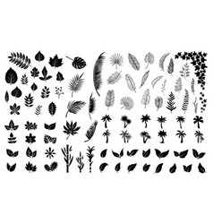 leaves silhouettes black leaf palm tree foliage vector image